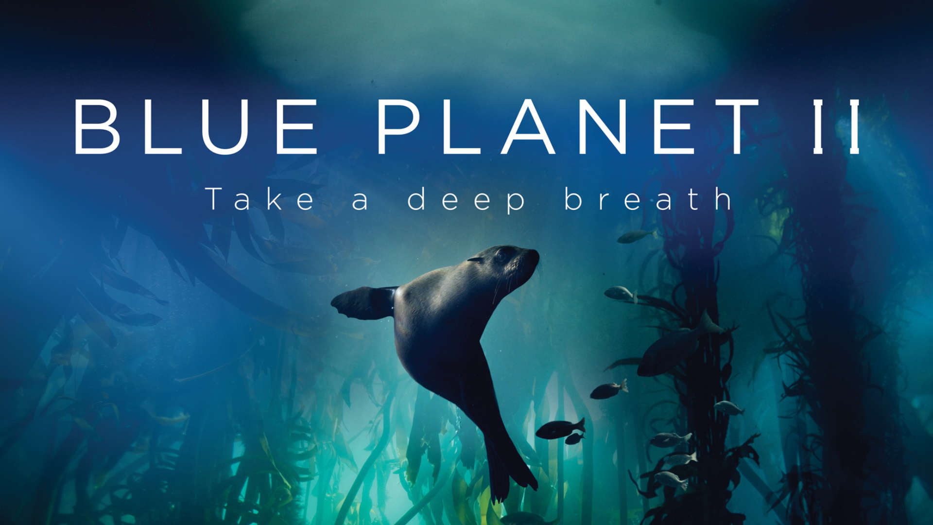Blue Planet graphics and branding by BDH Creative
